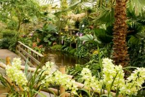 Orchideeenhoeve Luttelgeest